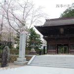法多山尊永寺の桜が満開