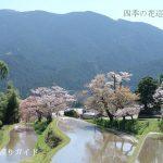三多気の桜 再訪