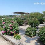 日野ダリア園のぼたん苑