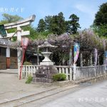 八幡神社-高虎藤まつり
