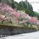 清内路の花桃街道