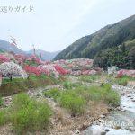 月川温泉郷の花桃の里