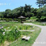 岡崎市東公園花菖蒲まつり