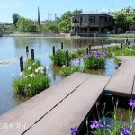 枚方市-市民の森花しょうぶ園