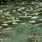 モネの池のスイレン