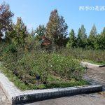 庄堺公園バラ園