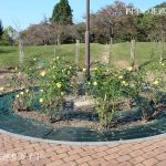 春日井都市緑化植物園の秋バラ