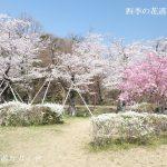 水源桜まつり