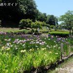 亀山公園花しょうぶ園