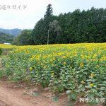 平石農場ひまわり畑