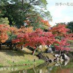 玄宮園・楽々園の紅葉