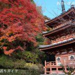 宇治・三室戸寺の紅葉