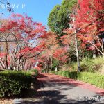 岡崎市東公園の紅葉