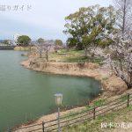 にごり池自然公園の桜