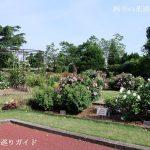 京都府立植物園のばら園