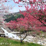 花桃の里パークランド周辺