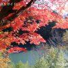 箕輪もみじ湖の紅葉