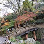 浜松城公園の紅葉2019